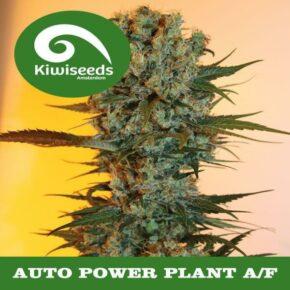 Auto Power Plant A/F