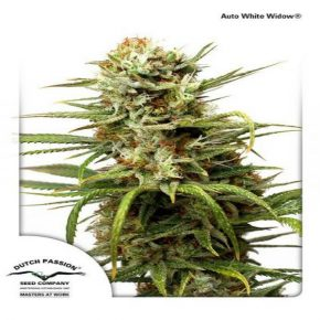 Auto White Widow®