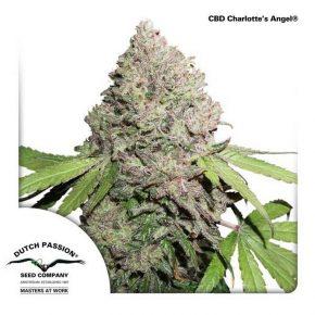 CBD Charlotte's Angel®