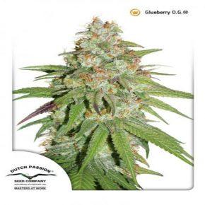 Glueberry OG®