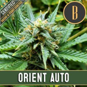 Orient Auto