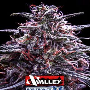 Z Valley